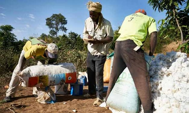 Mali expects record cotton output