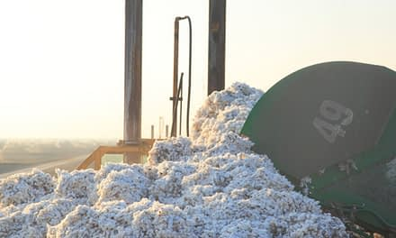 Oritain to offer '100 per cent traceable cotton' collaboration