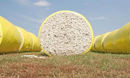 Cotton consumption to reach all-time high in 2018-19