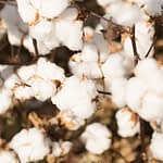 The Year 2020 and Cotton Textiles Sector