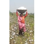 DBS launches an organic cotton procurement financing pilot programme in India