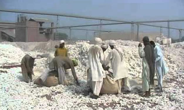 Pak cotton production hampered by absence of crop zoning
